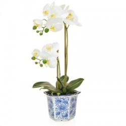 White Phalaenopsis Orchid Plant in Blue Pot - ORC010