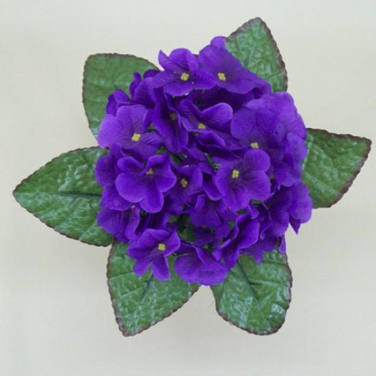 African Violet Purple - V012 R4