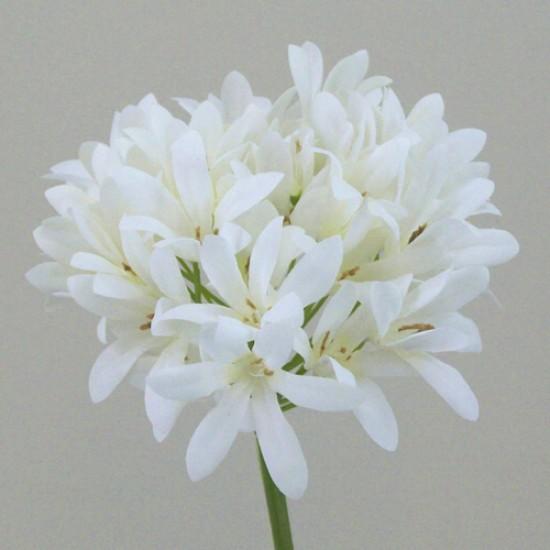 Agapanthus Cream - A047