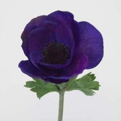 Silk Anemone Purple - A007A B2