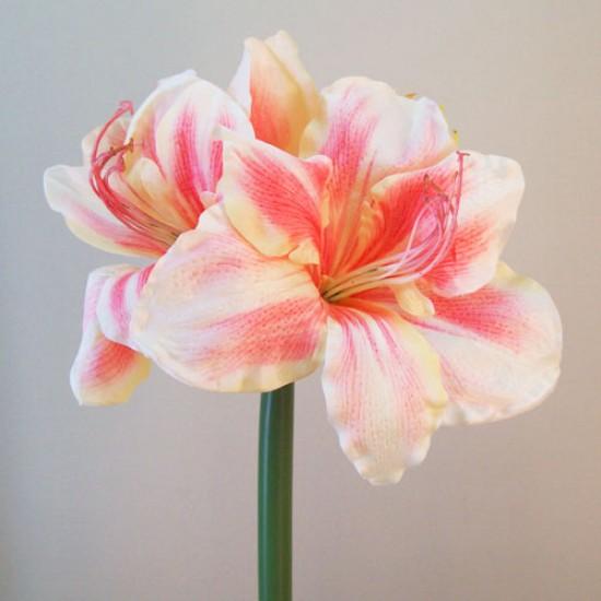 King Artificial Amaryllis Cream Pink - A118 A1