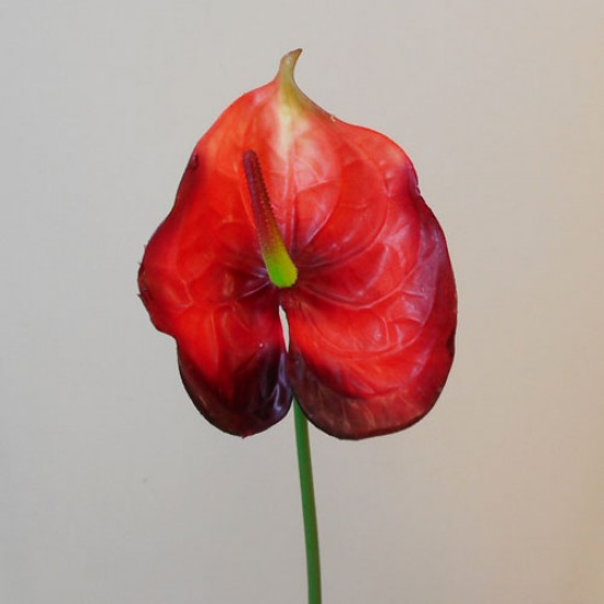 Real Touch Artificial Anthurium Red - A016a A1