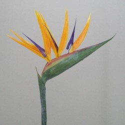 Artificial Birds of Paradise Large - B001 A3