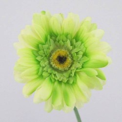 Silk Gerbera Lime Green - G001 E2