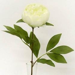 Peony Flowers Cream - P031 K3