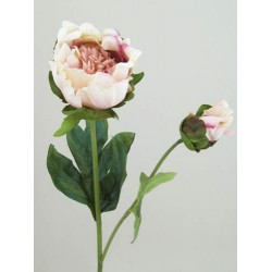 Vintage Peony Flowers Peach - P087 K2