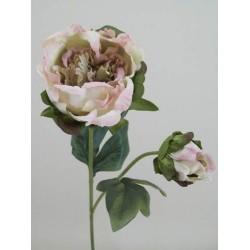 Vintage Peony Flowers Pink - P088