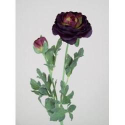 Ranunculus Damson - R042a O2