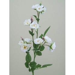 Wild Rose Spray White - R102 P2
