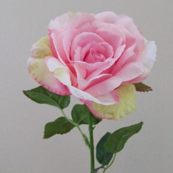 English Roses Pale Pink - R419