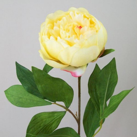 Peony Flowers Yellow - P025 K3