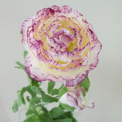 Artificial Ranunculus Flowers Cream and Dark Pink - R042b O2