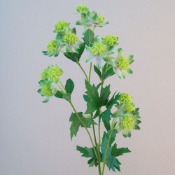 Artificial Astrantia Green Flowers - A106 B2
