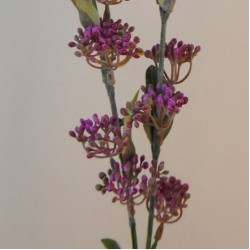 Artificial Hedgerow Berries Spray Purple - BER015 B3