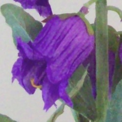 Artificial Campanula Purple Flowers - C186 A1