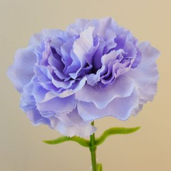 Galaxy Carnation Lavender Purple - C041 C4