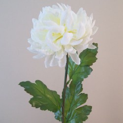 Bloom Chrysanthemums Cream - C220 E1