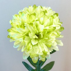 Pompom Chrysanthemum Lime Green - C050 D3