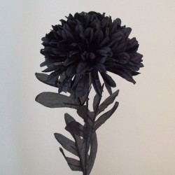 Pompom Chrysanthemum Black - C249 D1