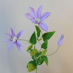 Clematis Lavender 3 Flowers - C028 C2