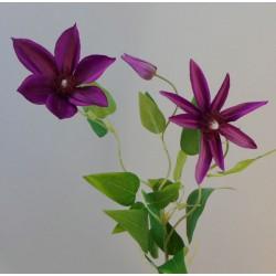 Clematis Purple 3 Flowers - C090