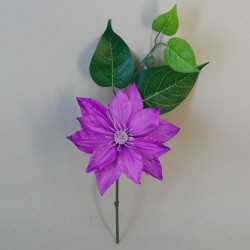 Clematis Purple Short Stem - C012 D4