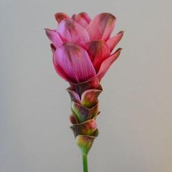 Artificial Curcuma Longa | Turmeric Flower Pink - T032 Q3
