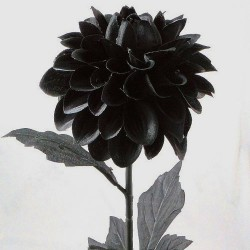 Artificial Dahlias Black - D122 C3