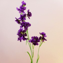 Galaxy Delphinium Purple - D129 A1