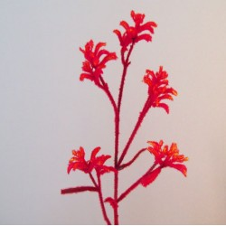 Artificial Kangaroo Paw Flowers - KAN001 H2