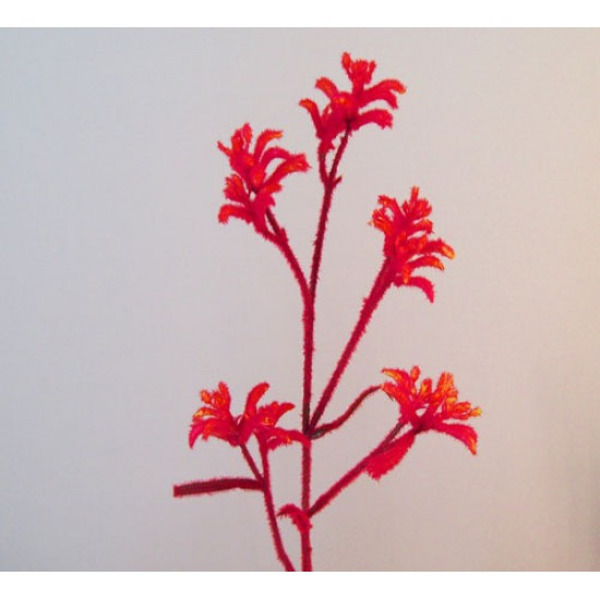 Artificial Kangaroo Paw Flowers - KAN001 H2