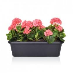 Artificial Plants Pink Geraniums in Black Trough - PLA001 OF