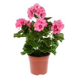 Potted Plants Artificial Geraniums Pink - GER007 OFF