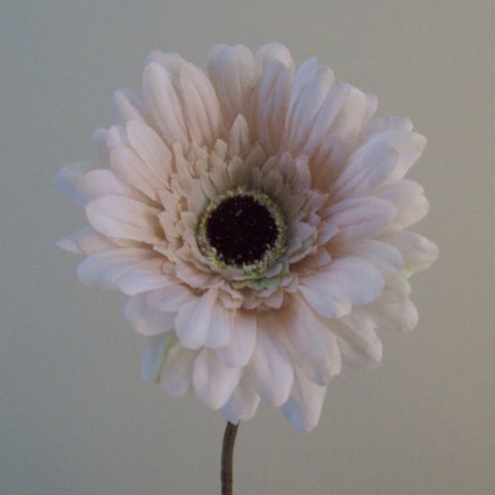 Silk Gerbera Cream Beige - G155 KK1