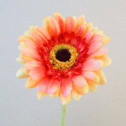Artificial Gerbera Two Tone Coral - G164