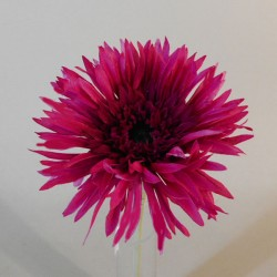Artificial Spider Gerbera Hot Pink 26cm - G027 F2
