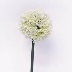 Giant Silk Allium Cream - A020 A1