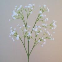 Gypsophila