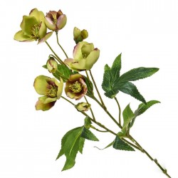 Artificial Helleborus Christmas Roses Stem Green Burgundy 55cm - H060 H3