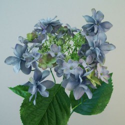 Large Silk Lacecap Hydrangeas Blue - H005 FF1