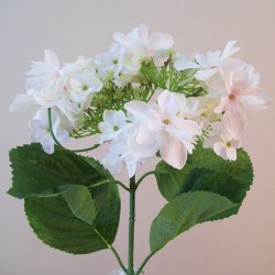 Large Silk Lacecap Hydrangeas White with a hint of Pink - H011 G1