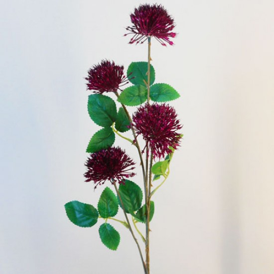 Fireball Lily Dark Pink - L090 AA1