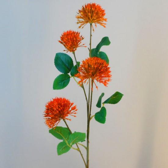 Fireball Lily Orange - L091 AA1