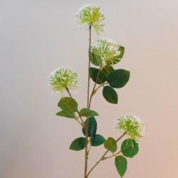 Fireball Lily White - L048 AA1