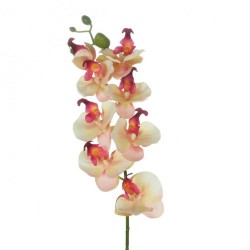 Artificial Phalaenopsis Orchids Pink Cream - O131 K1