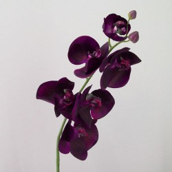Real Touch Phalaenopsis Orchids Aubergine Purple 75cm - O085 J4