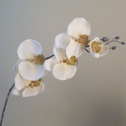 Artificial Phalaenopsis Orchids Rich Cream - O113 BX10