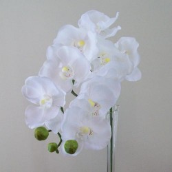Artificial Real Touch Phalaenopsis Orchids White - O081 J4