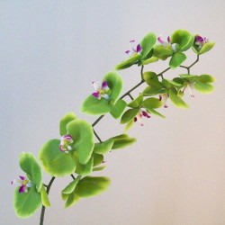 Real Touch Phalaenopsis Orchid Green Pink 100cm - O105 K4