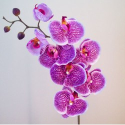 Real Touch Artificial Phalaenopsis Orchid Magenta Pink - O109 K2